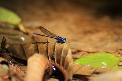 De la serie como una libélula en el bosque 16