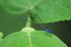 De la serie como una libélula en el bosque 18