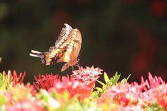 De la serie mariposas 1