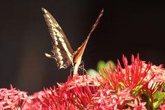 De la serie mariposas 2