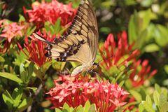De la serie mariposas 3