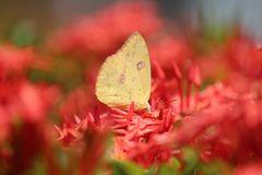 De la serie mariposas 4