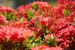 De la serie mariposas 5