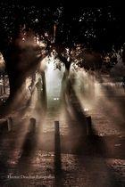De luces y sombras