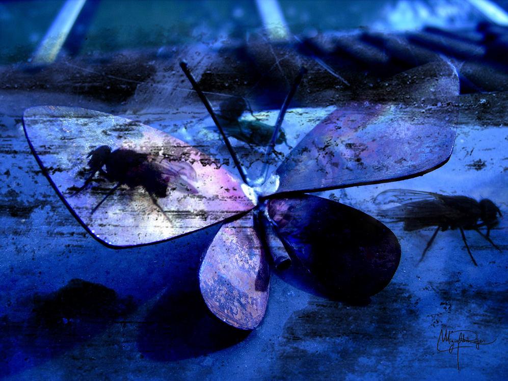 De moscas y mariposas