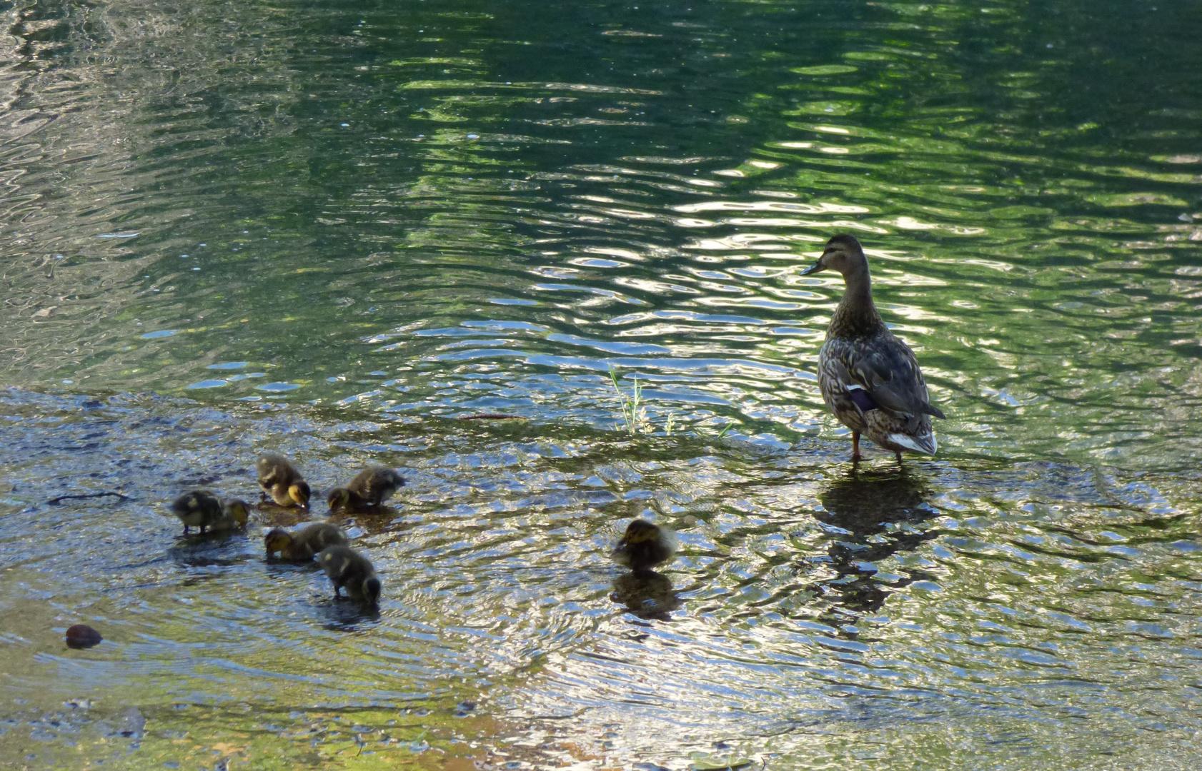 De paseo con la familia