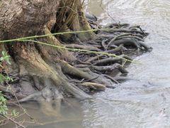 ..De simples racines..