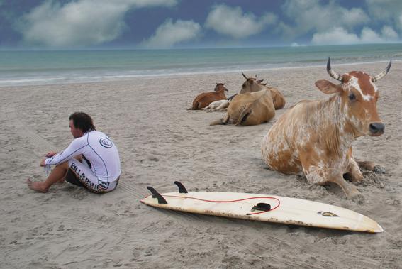 de vaca en la playa