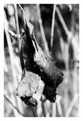 Dead leaf-2