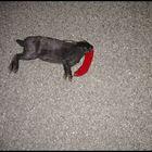 dead rabbit one