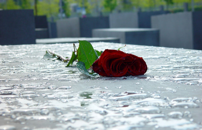 dead red rose...some say it's a melancholy rose