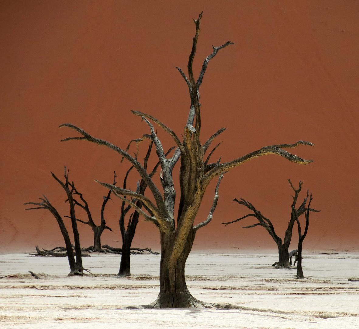 Dead Vlei - ein Ort wo tote Bäume leuchten