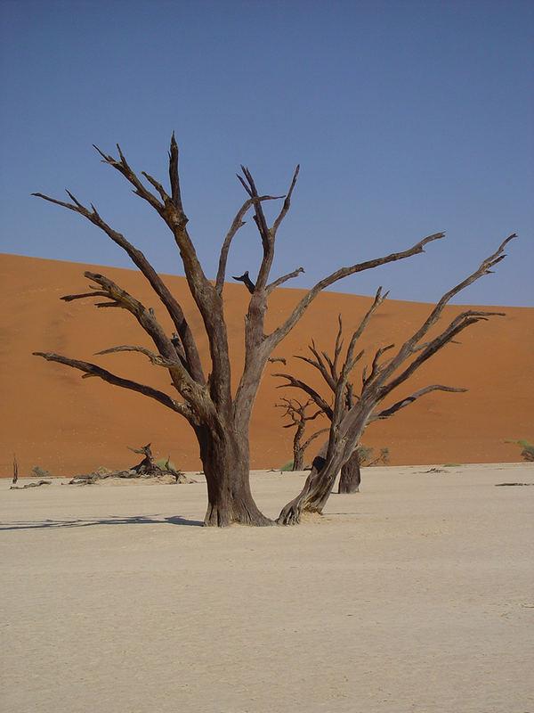 Dead Vlei Namib