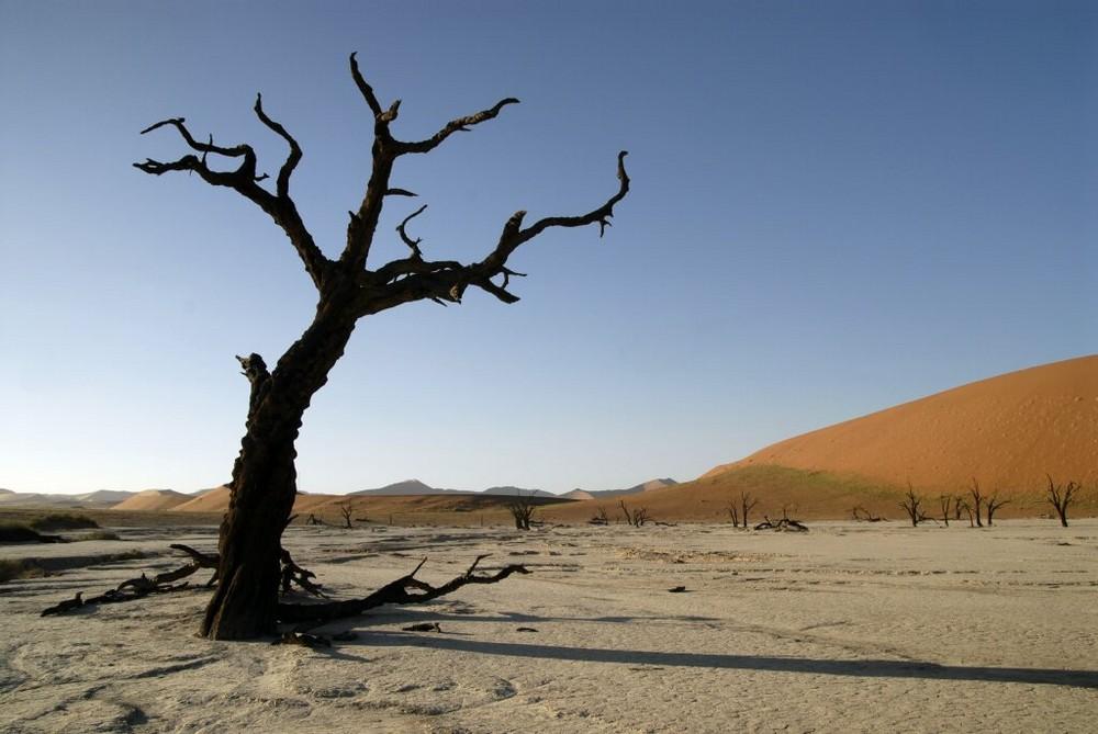Dead Vlei Namibia 3