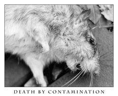 Death by Contamination