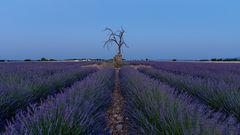 Death Tree Blaue Stunde - 6438