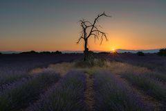 Death Tree - Die Sonne geht auf - 6502