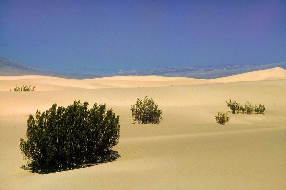 Death Valley - Dünenlandschaft