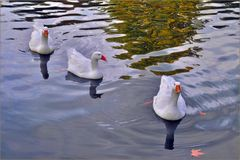 début d automne au lac.....