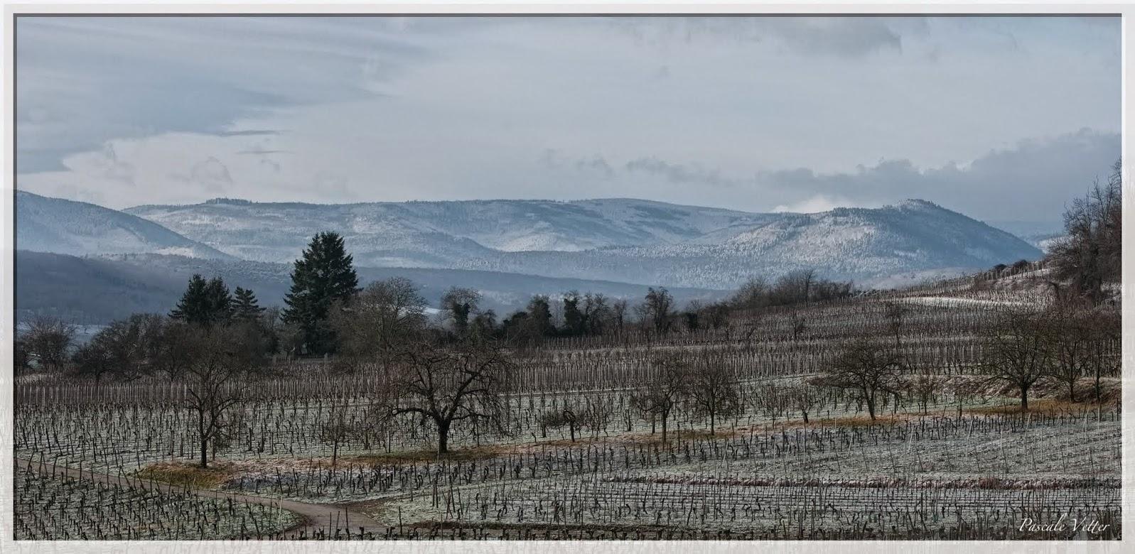 debut janvier, dans le vignoble alsacien