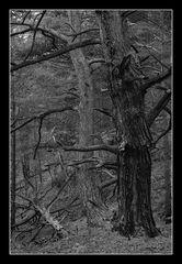 Deep Forest 02