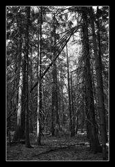 Deep Forest 03