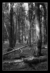 Deep Forest 04