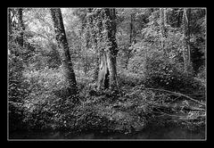 Deep Forest 05