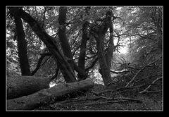 Deep Forest 06