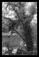 Deep Forest 07