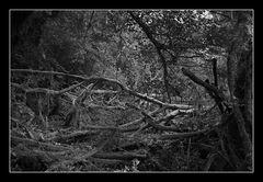 Deep Forest 08