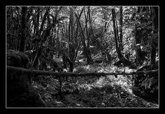 Deep Forest 09