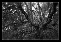 Deep Forest 10