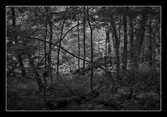 Deep Forest 12