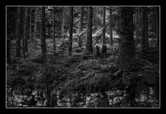 Deep Forest 13