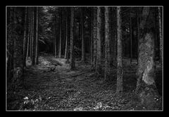 Deep Forest 14