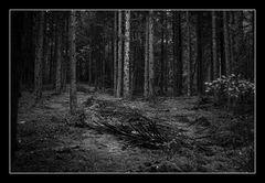 Deep Forest 15