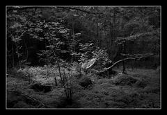 Deep Forest 16