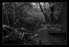 Deep Forest 17