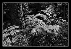 Deep Forest 18