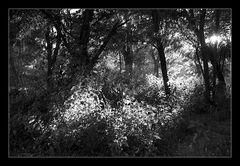 Deep Forest 19