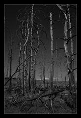 Deep Forest 20