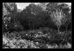 Deep Forest 21