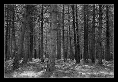 Deep Forest 22