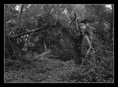 Deep Forest 23