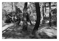 Deep Forest 24