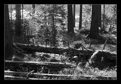 Deep Forest 25