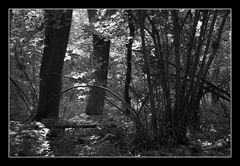 Deep Forrest 11