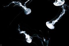 deep-light-trace of life