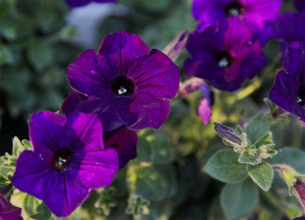 Deep Purple....